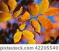고엽, 마른 잎, 숲 42205540