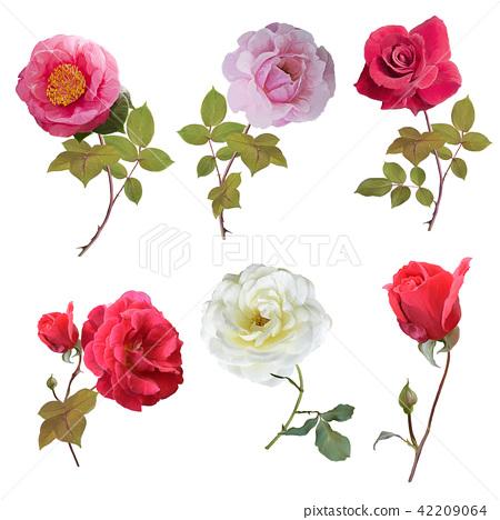Rose set watercolor 42209064