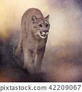 Florida panther or cougar painting 42209067
