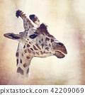 giraffe head digital painting 42209069