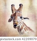 giraffe head digital painting 42209070