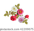Rose flowers watercolor 42209075