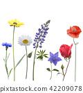 花朵 花 花卉 42209078