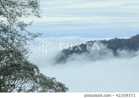 山,雲海,群山 42209371
