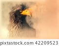 Steller's sea eagle sketch. Digital illustration 42209523