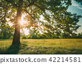 Summer Sunny Forest Trees And Green Grass. Nature Wood Sunlight  42214581