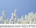 pear, inunashi, ornamental use 42214703