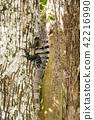 iguana, reptile, animal 42216990