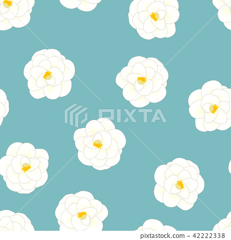 White Camellia Flower on Light Blue Background 42222338