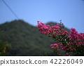 crape myrtle, lagerstroemia indica, pink 42226049