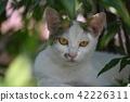 cat, pussy, a cat 42226311