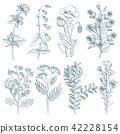 plant, vector, botanical 42228154