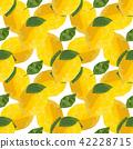 lemon, fruit, yellow 42228715