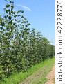 작물, 식물, 허브 42228770