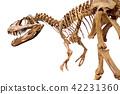 Dinosaur skeleton over white isolated background 42231360
