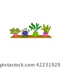 Flat vector set of 4 houseplants in colorful ceramic pots. Cute green decorative plants on wooden 42231920