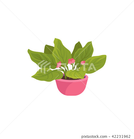 Flat vector icon of viola plant in bright pink pot. Houseplant with small blooming flowers and green 42231962