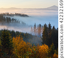 Autumn misty Carpathians, Ukraine. 42232169