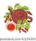 schisandra tea illustration 42234303