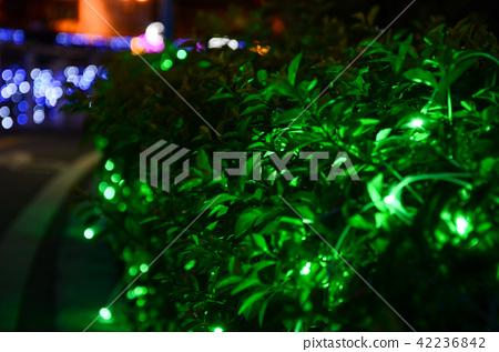 元宵節,燈會,台灣,草叢上的燈串 42236842