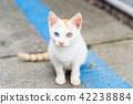 cat, pussy, stray cat 42238884