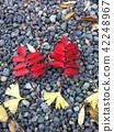 autumn, autumnal, maple 42248967