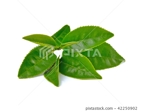 Green tea leaf isolated on white background 42250902