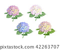 Vector highly detailed illustration of hydrangea  42263707