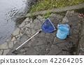 Small fish, fish, fishes 42264205
