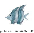 Fish isolated on white background 42265789