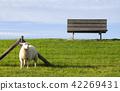Sheep on a dike near Moddergat 42269431
