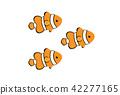 anemone fish, anemonefish, clown anemonefish 42277165