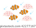 anemone, fish, anemonefish 42277167