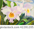 Painting, orchid, flower 42281205