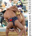 Student sumo 42288103