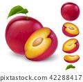 plum, fruit, vector 42288417