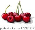 cherries cherry cartoon 42288912