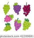 grape vector collection design 42289681