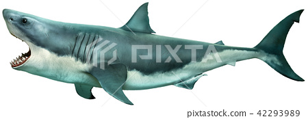 Great white shark side view 3D illustration 42293989