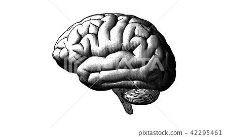 Human brain engraving illustration on white BG 42295461