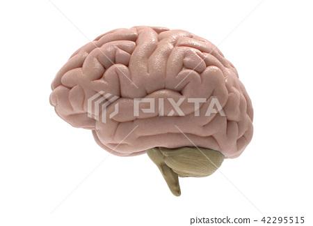 3D brain illustration isolated on white BG 42295515