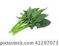 green spinach isolated on white background 42297073