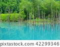아오이이케, 청의 호수, 연못 42299346