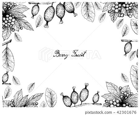 Christmas Berries and Elaeagnus Latifolia Fruits 42301676