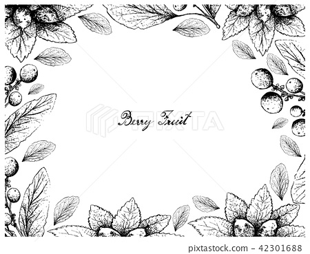 Dwarf Whitebeam and Orangeberry Fruits 42301688