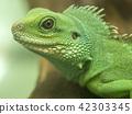 도마뱀, 파충류, 드래곤 42303345