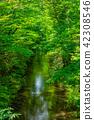 강, 초여름, 타마가와 42308546