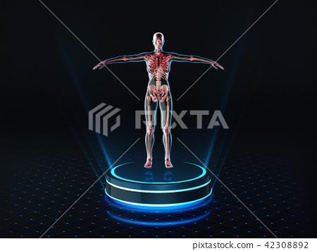 Hologram Female anatomy and skeleton on pedestal 42308892