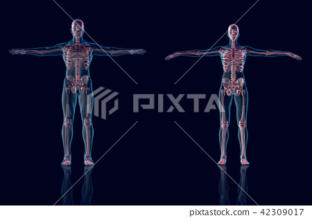Hologram Man,Hologram Female anatomy and skeleton 42309017