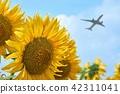해바라기, 비행기, 꽃 42311041